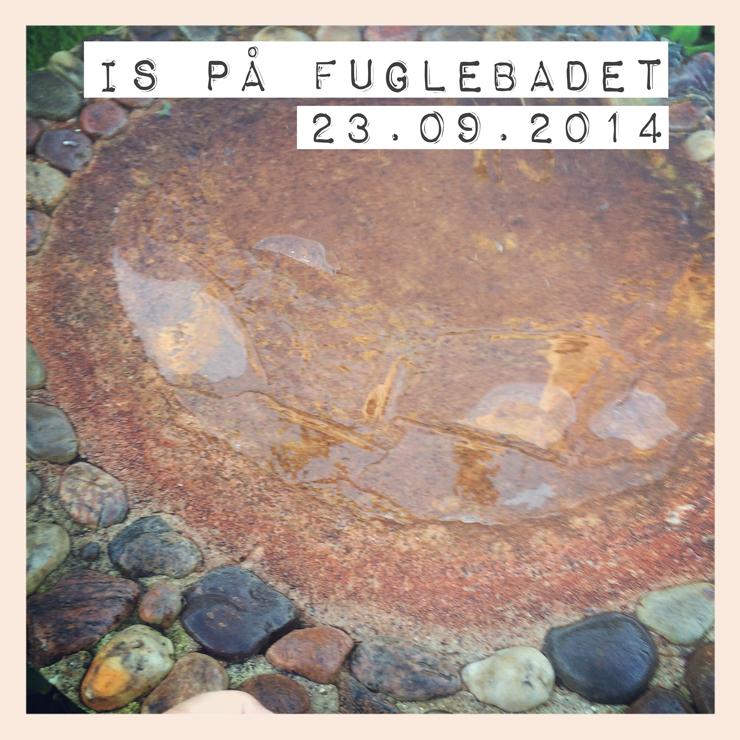Is_på_fuglebadet_230914