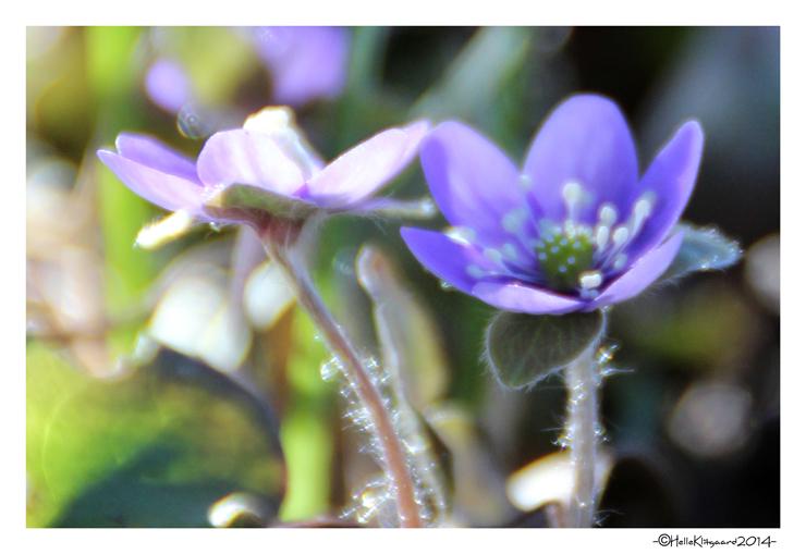 anemone_120314