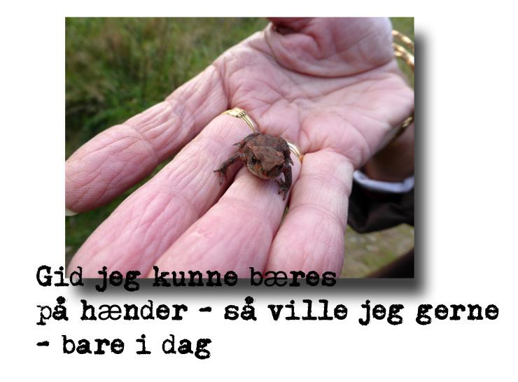 frø_hånd_091013