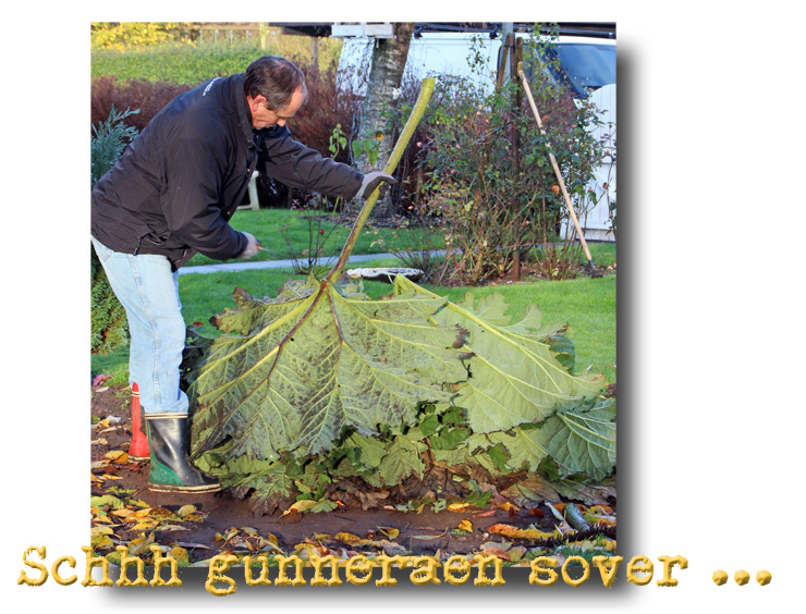 gunneraen_sover_101113