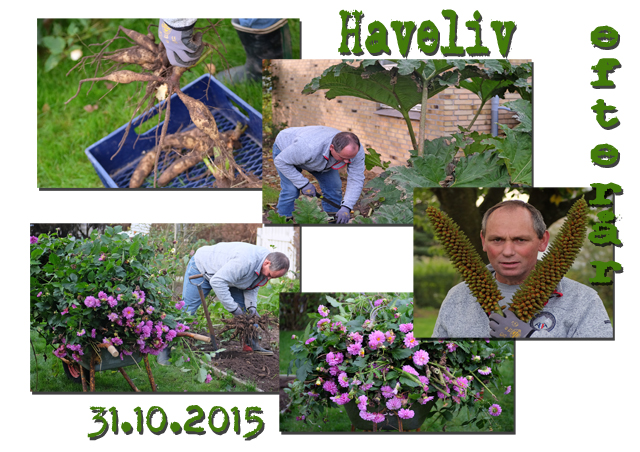 haveliv__31.10.2015