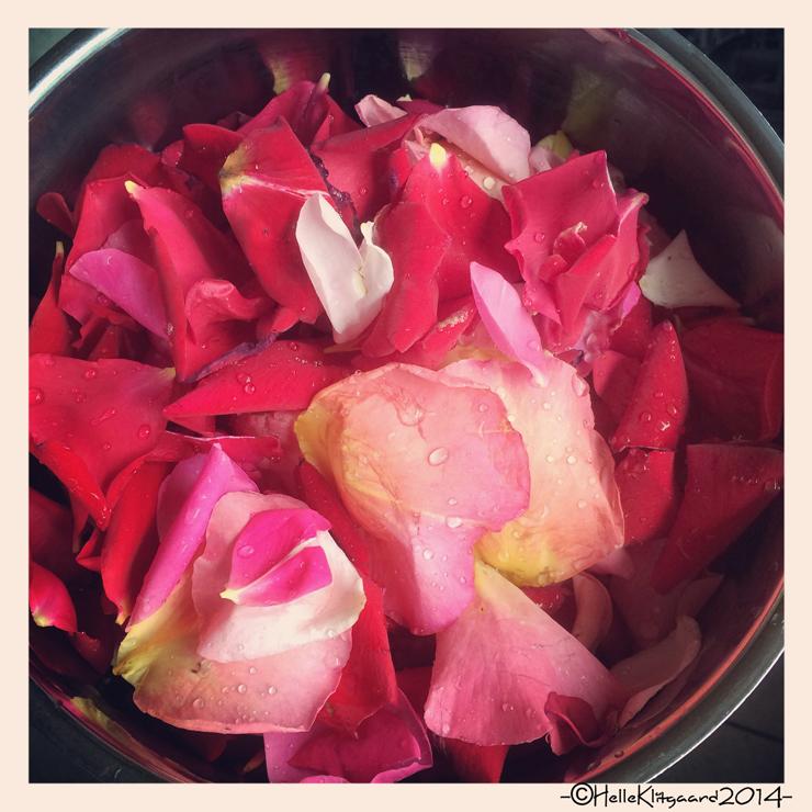 rosengele_210614_2
